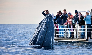 Travel Point Africa: Whale Watching Tour Including Pick-Up and Drop-Off from R199 for One with Travel Point Africa (Up to 78% Off)