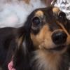 宮城県/旭ヶ丘 ≪トリミングコース(全身カット・お耳掃除・シャンプー・マイクロバブルシャワー・肛門腺ケアなど) 小型犬が対象≫