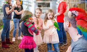 Papugarnia Carmen: Urodziny w papugarni Carmen dla 10 osób za 249,99 zł – 2 lokalizacje (zamiast 420 zł)