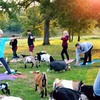 Goat Yoga Class at ATX Goat Yoga