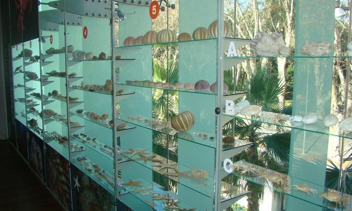 Entrada al museo Alborania para niño y/o adulto desde 6 € en Aula del Mar