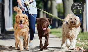 Cantinho da Tosa: Cantinho da Tosa – Taguatinga: 1h de passeio para cães ou 1 hospedagem