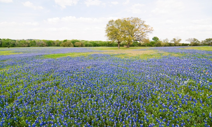 2-Night Romantic Stay in Texas Hill Country