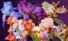 2-Pack of Bare-Root Hybridizer German Irises: 2-Pack of Bare-Root Hybridizer German Irises. Free Returns.