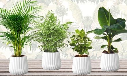 Lot de 4 plantes dintérieur