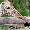 Tails, Tunes & Tapas at Cheyenne Mountain Zoo – Up to 32% Off