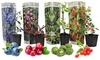 Set bessenplanten voor smoothies