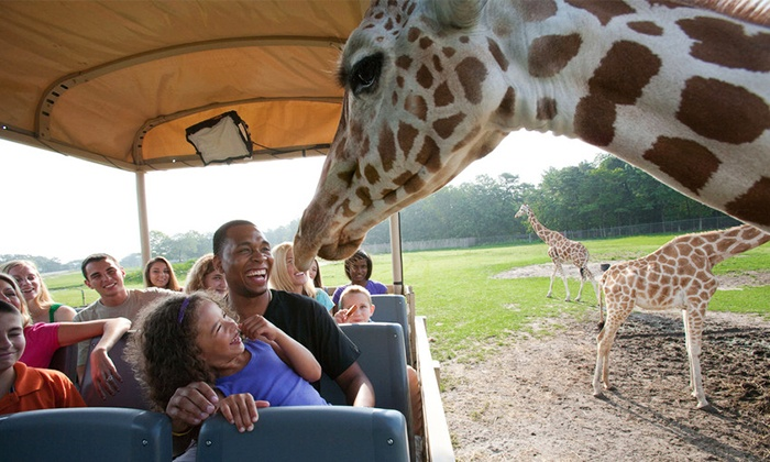 Expires: 01/06/19 Details: Over Georgia only!Get Holiday in the Park Admission Tickets for $ Park Admission Ticket to Six Flags Over Georgias HOLIDAY IN THE PARK! Valid for use any regular operating day of choice, 11/3/ 1/6/
