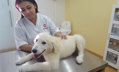 Annual Vaccines for Dog or Cat with Deworming, and DM Tag at Pet Station Veterinary Clinic (Up to 41% Off)