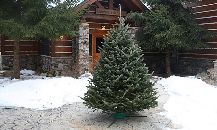 Fresh Cut Christmas Trees.Fresh Cut Christmas Tree With Free Home Delivery