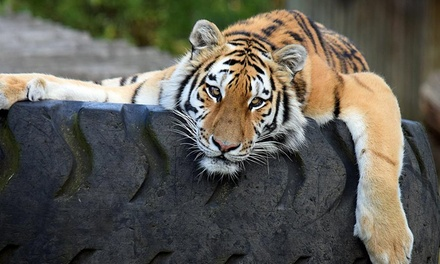 One Child, Adult or Family Entry Ticket to Port Lympne or Howletts Wild Animal Park (Up to 38% Off)