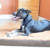 Armarkat Memory Foam Pet Beds