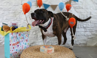 Birthday Cakes For Dogs In Massachusetts ~ Boston pet stores & services deals in boston ma groupon