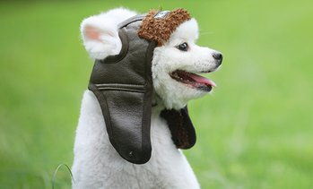 One or Two Retro-Style Dog's Warm Winter Hats