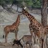 Safari en coche en Sierra Aitana