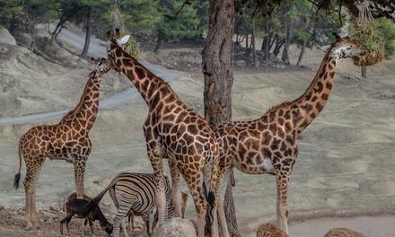 Entrada al parque y safari para 1 o 2 adultos con 1 o 2 niños desde 24 € en Safari Aitana
