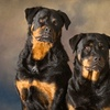 82% Off Pet Photo Session in Saint Francis