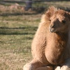 Up to 55% Off a Petting-Zoo Walking Tour