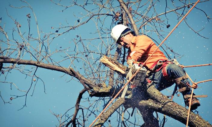 Embark Tree Service - Hillsboro Estates: $99 for Three Man-Hours of Tree Services from Embark Tree Service ($225 Value)