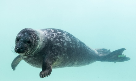 The Cornish Seal Sanctuary