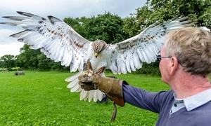 Stockley Birds Of Prey: Halk Walk for One, Two, or Four People at StockleyBirds of Prey (65% Off)