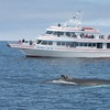 Up to 41% Off Whale-Watching Tour at Newburyport Whale Watch