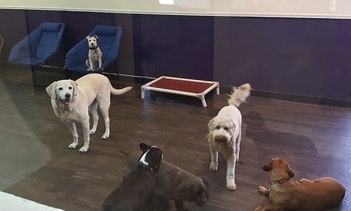 Canine Social Club - Northwest Oklahoma City: Three, Five, or 10 Days of Daycare with Grooming for a Dog at Canine Social Club (Up to 62% Off)