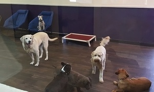 Canine Social Club: Three, Five, or 10 Days of Daycare with Grooming for a Dog 40 lb or Under at Canine Social Club (Up to 62%Off)