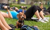 Up to 78% Off Workout Classes & Dog Obedience Training