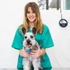 Chequeo y vacuna para mascota