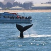 Chris' Whale Watching Tours – Up to 30% Off