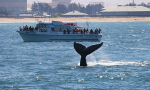 Chris' Whale Watching Tours: $25.99 for a Three-Hour Whale-Watching Cruise from Chris' Whale Watching Tours (Up to $37 Value)