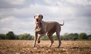 Richard Baca Photography: Pet Photoshoot Plus Canvas Print for £12.50 at Richard Baca Photography