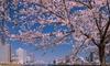 【PR】築地乗船/桜の佃島&イベント会場観覧クルーズ/海鮮丼のお食事付