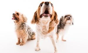 La Lumiere Photography: Pet Photoshoot Plus Digital Album with Five Images from La Lumiere Photography (94% Off)