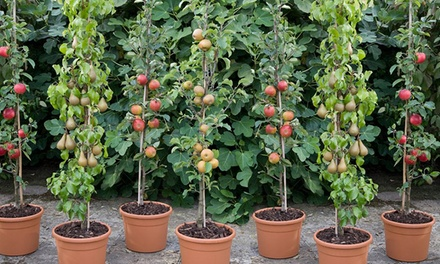 Orchard Fruit Trees Collection