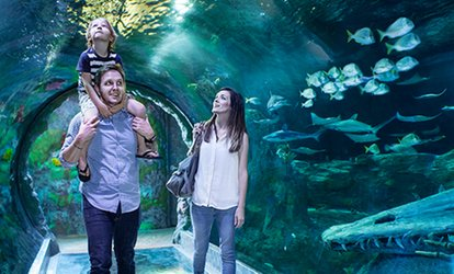 image for Admission for One Adult or Child to SEA LIFE Orlando (Up to 11% Off)