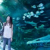 Up to 25% Off Child or Adult Entry to Sea Life Orlando
