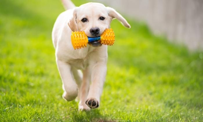 Party le Pooch - Multiple Locations: $81 for $150 Worth of Services — Party le Pooch