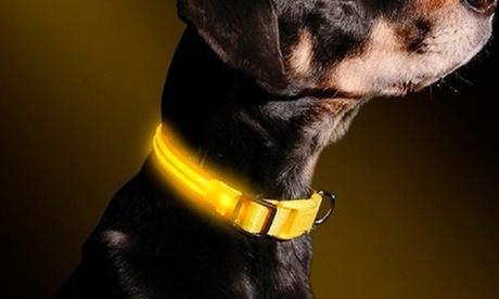 LED-Halsband in Gelb und in der Größe nach Wahl