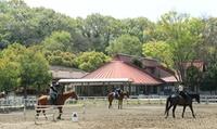 【最大64%OFF】癒しと感動をくれる、馬たちとのふれあい≪天候に左右されない屋内練習場完備。はじめての乗馬体験(騎乗30分・所要90分...