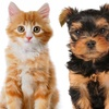 65% Off Dog or Cat Wellness Package