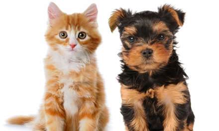 $79 for Dog or Cat Annual Wellness Package at Dr. Simon's Pet Clinic ($225 Value)