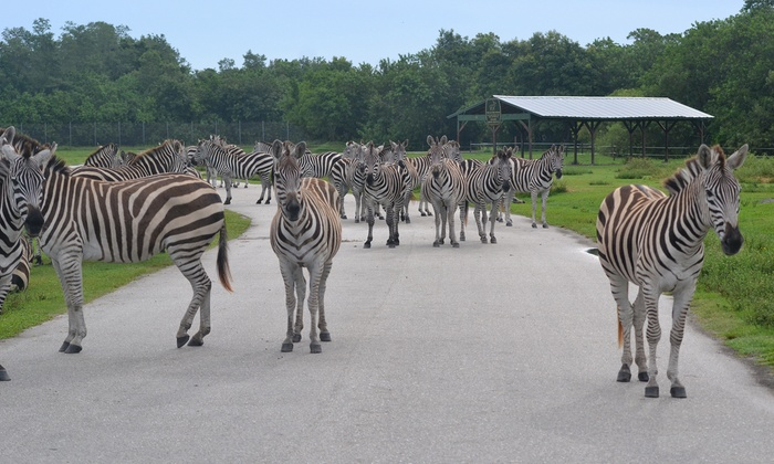 Lion Country Safari Up To 35 Off Loxahatchee Fl Groupon West Palm Beach
