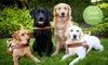 (Grassroots) Guide Dogs for the Blind: $10 Donation to Guide Dogs for the Blind