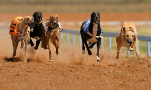 Love The Dogs: Entry For Up to Eight with Choice of Burger and Drink at London Wimbledon Stadium (Up to 74% Off)