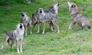 Parc Animalier de Courzieu: Loups, rapaces, escargots, chouettes : 1 entrée enfant ou adulte pour le Parc Animalier de Courzieu dès 5 €