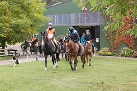 Pferdehof Moisburg: 2 Std. für 1 oder 2 Pers. Schnupperreiten und Kennlernen der Pferde im Pferdehof Moisburg (bis zu 65% sparen*)