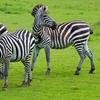 Sauver et aider des animaux sauvages