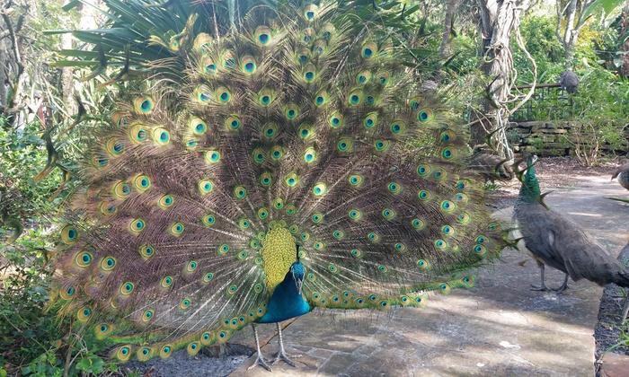 Up to 48% Off Jungle Prada Site Tour from Discover Florida